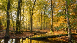 Fall Nature Forest Foliage 5120x2880 Wallpaper