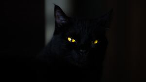 Cat Pet Stare 5472x3648 Wallpaper