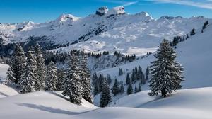 Snow Mountain Peak Spruce 3000x1974 Wallpaper