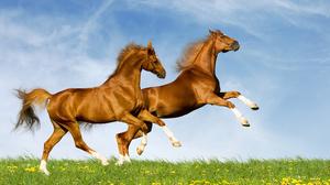 Animal Horse 2560x1600 Wallpaper