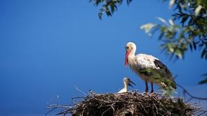 Stork Bird Baby Animal Nest 2048x1367 Wallpaper