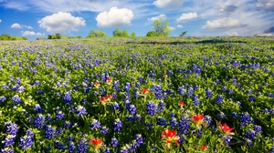 Cloud Field Flower Lupine Meadow Summer 2048x1367 Wallpaper