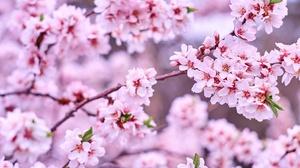 Earth Blossom 4608x3072 Wallpaper