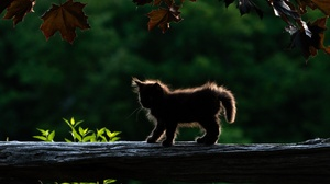 Baby Animal Cat Kitten Pet 2048x1425 Wallpaper