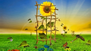 Abstract Grass Insect Leaf Spring Sunflower Yellow Flower 1920x1260 Wallpaper