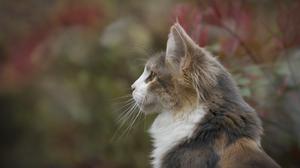 Cat Pet 2480x1728 Wallpaper