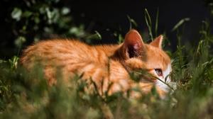 Baby Animal Cat Kitten Pet 6000x4000 Wallpaper
