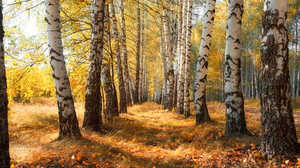 Landscape Trees Tree Bark Leaves Nature Outdoors Photography Fall 2500x1666 wallpaper