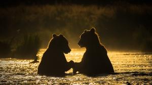 Bear Silhouette Wildlife Predator Animal 1920x1280 Wallpaper