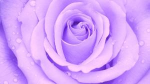 Flower Purple Flower Water Drop 3840x2160 Wallpaper