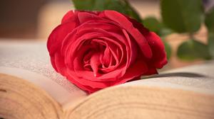 Book Flower Love Mood Romantic Rose 1920x1200 Wallpaper