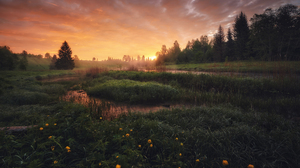 Anton Kononov Field Landscape Sunset Clouds Flowers Water Trees Outdoors Photography 2250x1500 Wallpaper