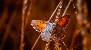 Animals Plants Insect Butterfly Nature 2400x1800 Wallpaper