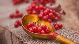 Berry Macro Spoon Viburnum 2304x1536 Wallpaper
