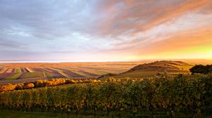 Horizon Landscape Nature Vineyard 3750x2500 Wallpaper