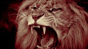 Muzzle Predator Animal Mouth Wildlife 1920x1282 wallpaper