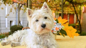 Dog Cute Pet 2959x1803 wallpaper
