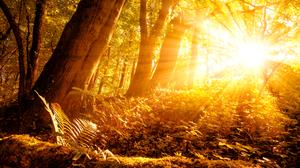Forest Moss Nature Sunbeam Tree 4500x3003 Wallpaper