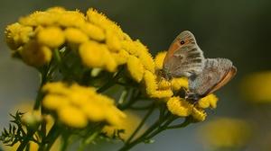 Butterfly Flower 4353x2902 wallpaper