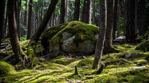 Nature Rock Moss Forest 5468x3645 Wallpaper