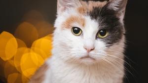 Bokeh Cat Pet 6720x4480 Wallpaper