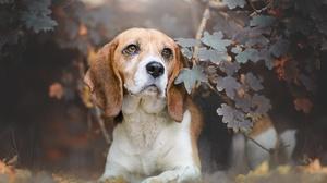 Dog Pet 2048x1333 Wallpaper