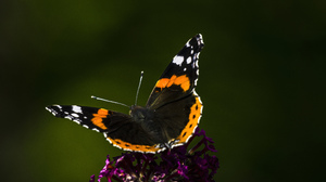 Nature Butterfly Flowers Closeup Insect Macro 6000x3376 Wallpaper