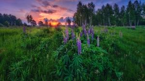 Field Outdoors Sunlight Flowers Plants 2560x1707 Wallpaper