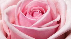 Pink Flower Flower Macro 4752x3168 Wallpaper