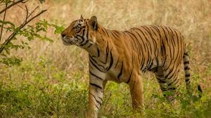 Big Cat Wildlife Predator Animal 2048x1365 wallpaper