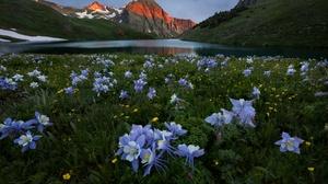 Flower Lake Meadow Mountain Nature 7429x4953 Wallpaper