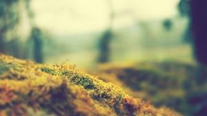 Grass Nature Macro Tilt Shift Plants Moss Photography 2560x1440 Wallpaper