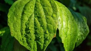 Close Up Dew Drop Leaf Nature 6000x4000 Wallpaper