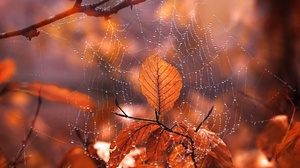 Depth Of Field Fall Leaf Macro Spider Web Water Drop 2560x1504 Wallpaper