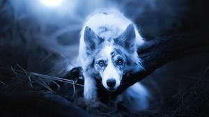 Dog Pet 2048x1366 wallpaper