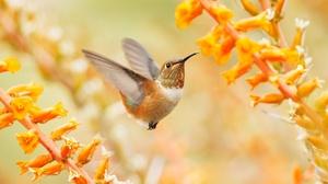 Bird Flower Hummingbird Wildlife 2048x1349 Wallpaper