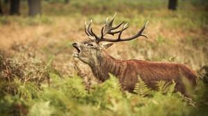 Nature Wildlife 2560x1600 Wallpaper