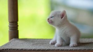 Baby Animal Kitten Pet 2048x1280 Wallpaper