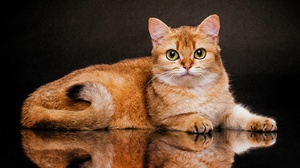 Pet Reflection 3200x2133 Wallpaper