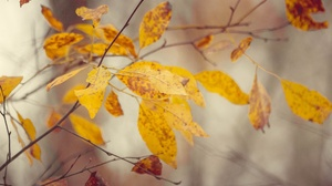 Fall Leaves Plants Outdoors 2560x1707 Wallpaper