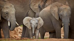 Animals Elephant Frontal View 1920x1080 Wallpaper