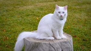 Animal Cat 5184x3456 Wallpaper