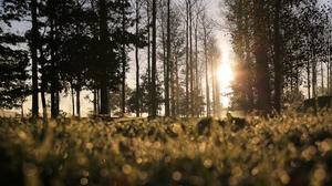 Nature Grass Bokeh Trees Worms Eye View Sunlight 3840x2160 wallpaper