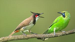 Animal Bird Branch 3941x2631 Wallpaper