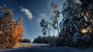 Winter Ice Cold Snow Nature Outdoors Trees 3840x2160 Wallpaper