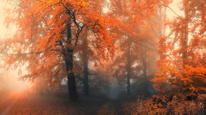 Fall Fog Foliage Forest Path Tree Orange Color 2560x1600 Wallpaper