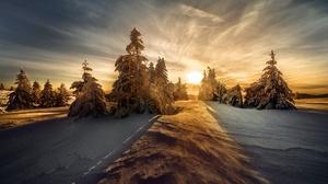 Nature Snow Spruce Sun Winter 2000x1334 Wallpaper
