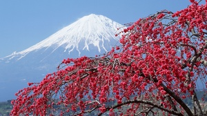 Blossom Japan Mount Fuji Volcano 2560x1440 Wallpaper