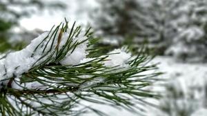 Nature Snow Winter Pine Trees 4032x3024 Wallpaper