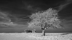Black Amp White Lonely Tree Nature Sky Tree 2048x1149 Wallpaper